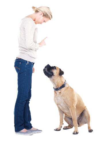 taller-curso-amartpalma-perro-obediencia
