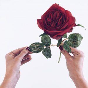 rosa del amor